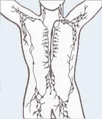 distribuição dos gânglios linfáticos