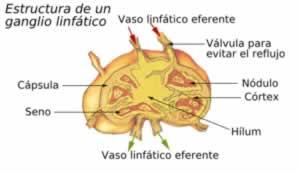 ganglios enfermedad: